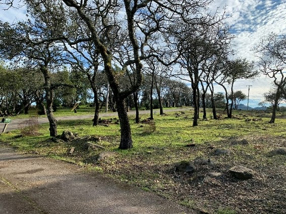 Tree cutting and thinning helps create defensible space