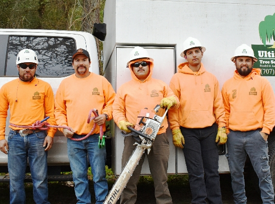 Ultimate provides emergency tree removal Santa Rosa and Sonoma County