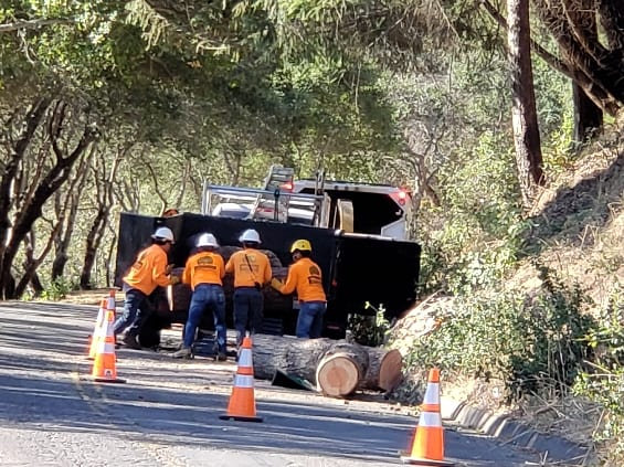 Best tree removal Santa Rosa and Sonoma County